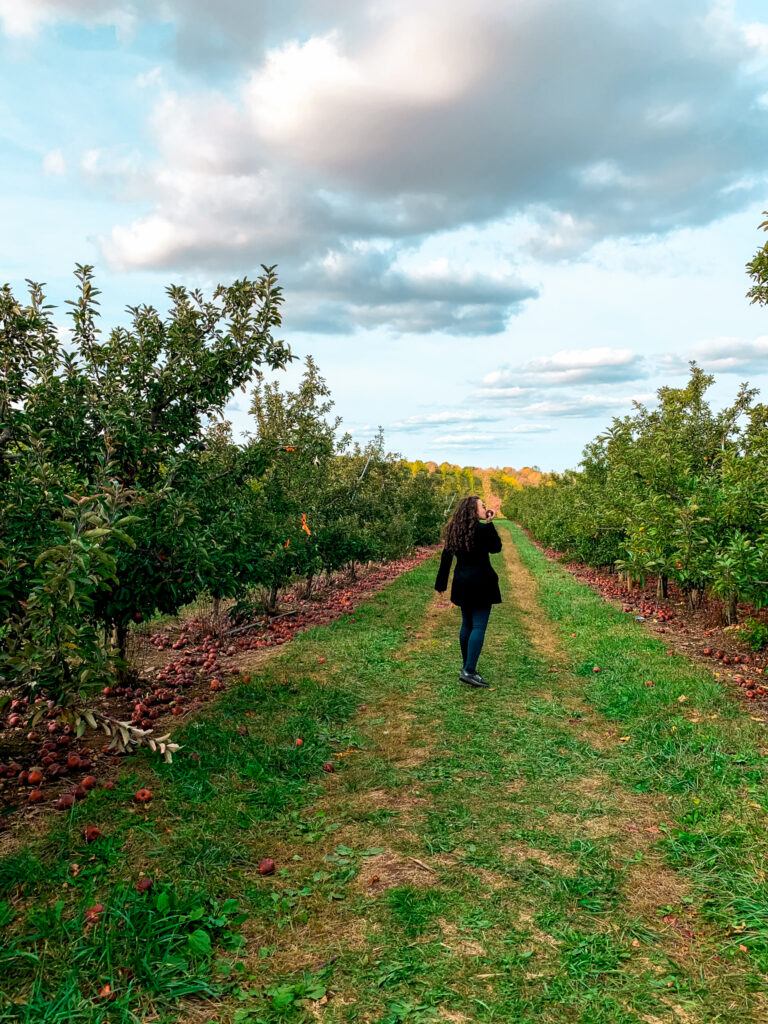 Apple picking in Connecticut is one of the best fall activities in the state. Here are some of the best places for pick-your-own!