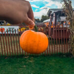 Your Guide to the Best Fall Activities in New York City